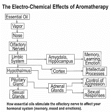 The electro-Chemical Effects of Aromatherapy